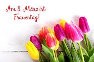 Bilder Tulpen Internationaler Frauentag Deutsch Blüte