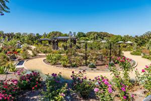 Wallpaper USA Gardens Rose California Design Shrubs South Coast Botanic Garden Nature