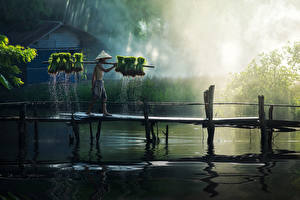 Fotos Asiaten Brücken Mann See Der Hut Shorts Nebel Arbeiten Natur