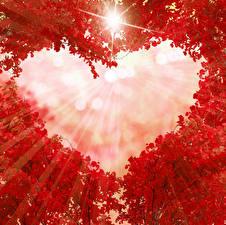 Hintergrundbilder Herbst Ast Rot Herz Lichtstrahl Vorlage Grußkarte Natur