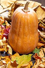 Hintergrundbilder Herbst Kürbisse Nahaufnahme Blattwerk das Essen