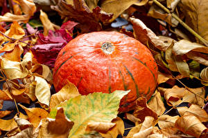 Fotos & Bilder Herbst Kürbisse Blattwerk Natur