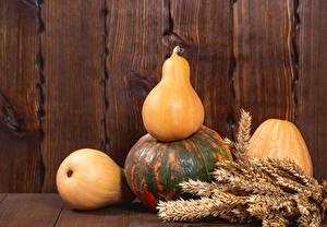 Fotos Herbst Kürbisse Mauer Bretter Spitze Natur