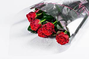 Hintergrundbilder Blumensträuße Rosen Weißer hintergrund Rot Blüte