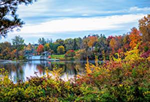 Fotos Kanada Herbst Fluss Bäume Strauch Canmore Alberta Natur