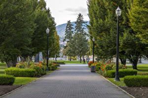 Hintergrundbilder Kanada Parks Straßenlaterne Strauch Bäume Kelowna Natur