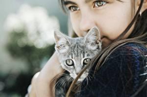 Bilder Hauskatze Niedlich Starren Kleine Mädchen Kätzchen Kinder Tiere