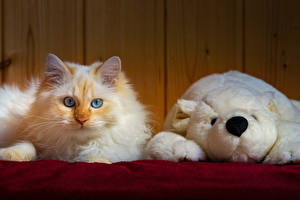 Tapety na pulpit Koty Zabawka Miś Spojrzenie zwierzę
