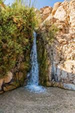 Fotos Israel Wasserfall Felsen Laubmoose David's Waterfall Natur