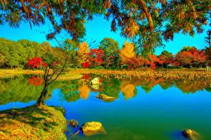 Fotos Japan Kyōto Herbst Parks Flusse HDR Bäume Ast Daikaku-ji Natur