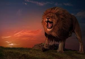 Fotos & Bilder Löwe Abend Grinsen Tiere