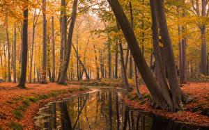 Fotos Park Herbst Niederlande Teich Bäume Blatt Voorstonden Natur
