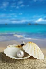 Fotos Perlen Muscheln Sand Unscharfer Hintergrund Natur