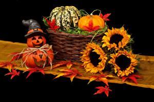 Bilder Kürbisse Sonnenblumen Herbst Halloween Weidenkorb Blatt Der Hut Blüte