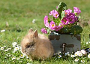 Image Rabbits Cubs Grass Fluffy animal