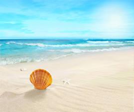 Fotos & Bilder Meer Wasserwelle Muscheln Strand Sand Stern-Dekoration Natur