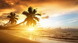 Fotos & Bilder Sonnenaufgänge und Sonnenuntergänge Küste Tropen Meer Palmen Natur