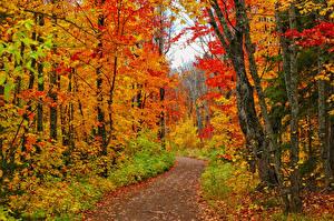 Fotos USA Herbst Wälder Blattwerk Bäume Weg Minnesota