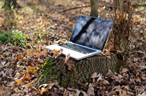 Hintergrundbilder Herbst Blattwerk Baumstumpf Notebook Natur