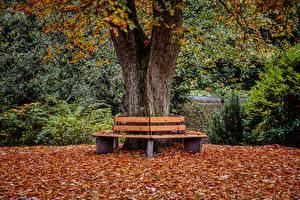 Hintergrundbilder Herbst Parks Bank (Möbel) Blatt Baumstamm Natur