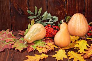 Fotos & Bilder Herbst Kürbisse Eberesche Blattwerk Natur