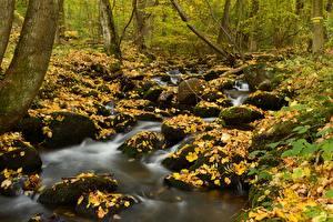 Photo Autumn Stone Foliage Creek Moss Nature