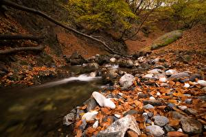 Wallpaper Autumn Stones Brook Foliage Nature