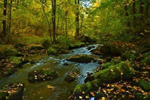 Image Autumn Stone Streams Moss Leaf Nature