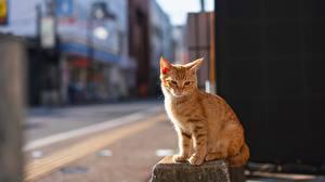 Hintergrundbilder Hauskatze Orange rot Bokeh Sitzen ein Tier
