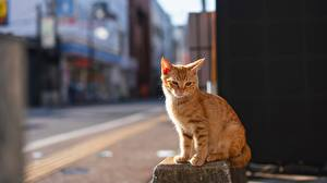 Papel de Parede Desktop Gatos Cor de gengibre Bokeh Sentados animalia