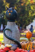 Fotos Kreative Deutschland Katze Kürbisse Ludwigsburg Pumpkin Festival