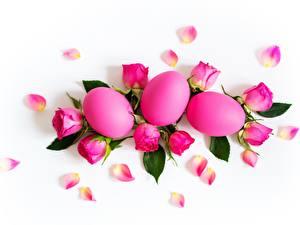 Bilder Ostern Rose Weißer hintergrund Ei Rosa Farbe Blüte
