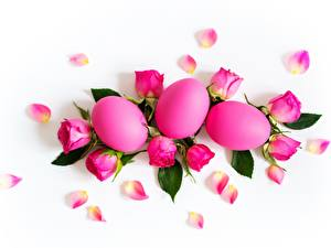 Wallpapers Easter Rose White background Eggs Pink color flower