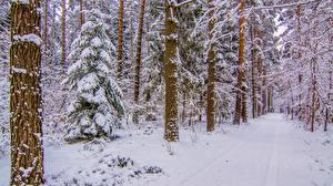 Bilder Wälder Winter Wege Bäume Schnee Natur