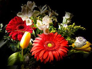 Bilder Gerbera Inkalilien Tulpen Lisianthus Blumensträuße Schwarzer Hintergrund Blumen