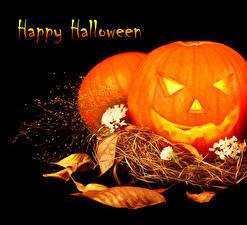 Picture Halloween Pumpkin Black background English Leaf Straw