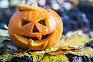 Bakgrundsbilder på skrivbordet Halloween Pumpa Närbild Löv