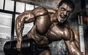 Hintergrundbilder Mann Bodybuilding Muskeln Körperliche Aktivität Hand Hanteln sportliches
