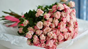 Photo Rose Bouquets Pink color flower
