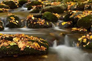 Images Stone Autumn Moss Leaf Stream Nature
