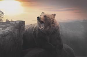 Hintergrundbilder Morgendämmerung und Sonnenuntergang Bären Braunbär Felsen