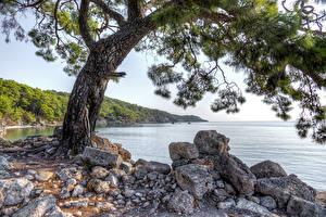 Bakgrunnsbilder Tyrkia Kystlinje Steiner Trær HDR Phaselis Natur