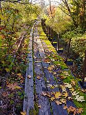 Fotos Vereinigte Staaten Herbst Eisenbahn Washington Bretter Blatt Laubmoose