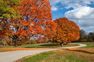 Bilder USA Parks Herbst Straße Bäume Blattwerk Arrow Rock State Park Missouri Natur