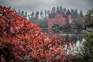 Fotos Herbst Burg Teich Tschechische Republik Strauch  Städte