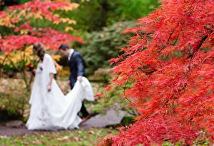Picture Autumn Men Blurred background 2 Wedding Groom Bride Nature