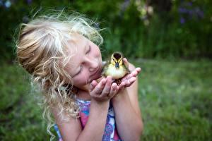 Bilder Vogel Ente Kücken Hand Kleine Mädchen Kinder