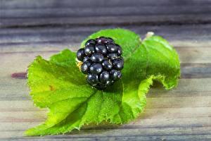 Fonds d'écran Mûre En gros plan Baie botanique Feuille aliments