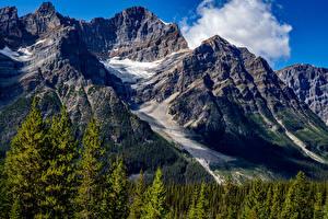 Hintergrundbilder Kanada Park Berg Wald Banff Laubmoose Natur