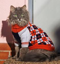 Bilder Katzen Starren Uniform Sweatshirt